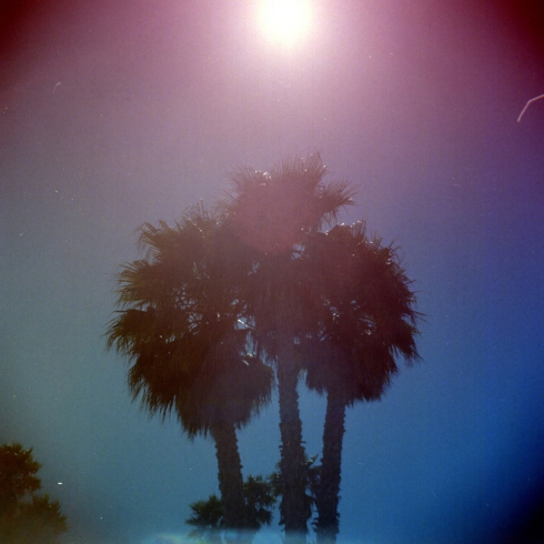Kodak Portra 160NC - gradient filters - Palme a Santa Cruz