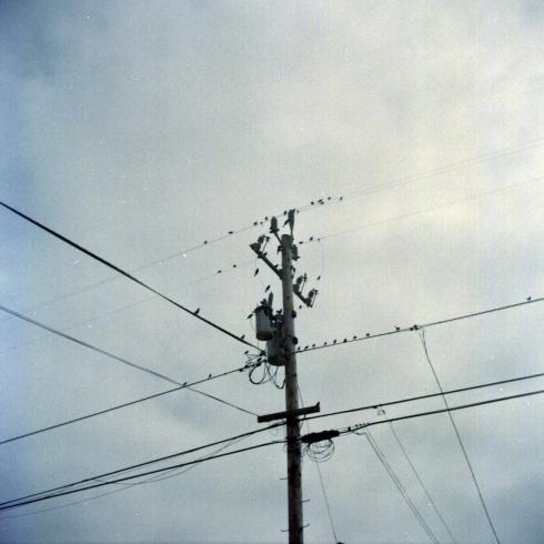 Kodak Portra 160 VC - Half Moon Bay - Classici pali con uccelli