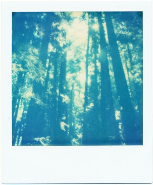 Polaroid SX70 - TZ Artistic exp. 09/09